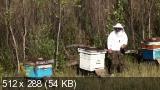 Пчеловодство. Продукты пчеловодства. Источники дохода (2014) HDRip
